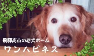 飛騨高山の老犬ホーム ワンハピネス