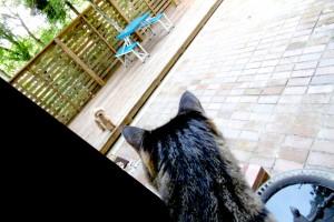 視線の先には…猫だ!