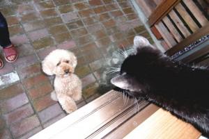 イブちゃんと猫のひじきこんにちは