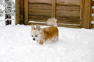 雪の中で遊ぶエルくん