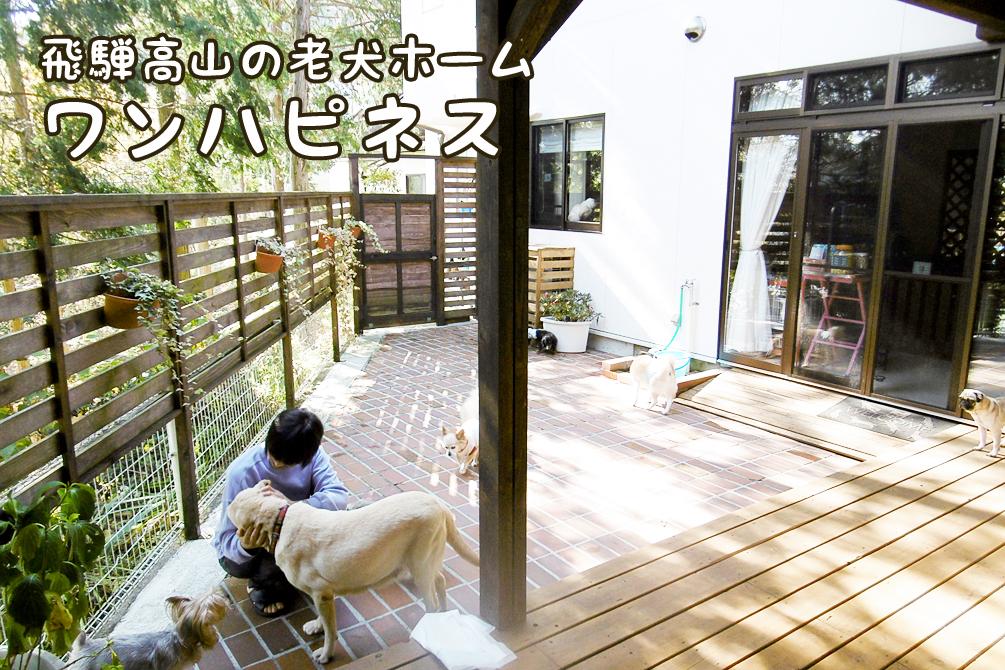 東海地方、岐阜県高山市(飛騨高山)の老犬ホーム ワンハピネス